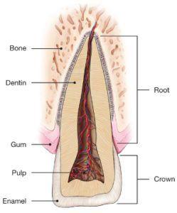 diagram of traumatic dental injuries